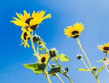 beautiful-blossom-blue-1125943_Nelly Aran 2
